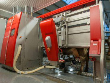Fiabilidad y capacidad, los puntos fuertes del robot de ordeño Lely Astronaut A5