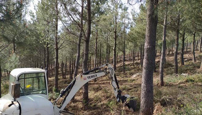 Medio Rural anuncia que habrá 700 beneficiarios de las ayudas para planes de ordenación forestal