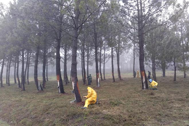 Baroña, la comunidad de montes que implica a sus vecinos
