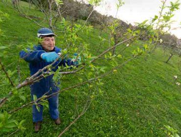 San Sadurniño recupera los cursos de fruticultura y apicultura suspendidos por la crisis sanitaria
