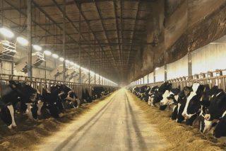 Situación del sector lácteo en China, el país con granjas de 100.000 vacas