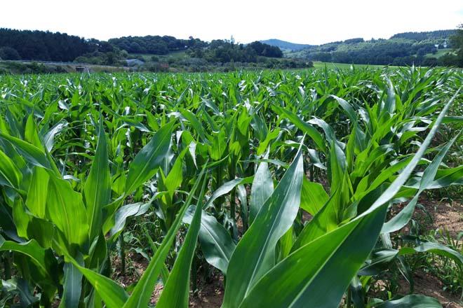 Profertil, el bioestimulante foliar que fortalece el cultivo y aumenta su productividad