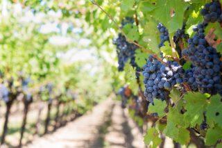 ¿Cuales son los países que mejor se comportan para la venta de vino durante el coronavirus?