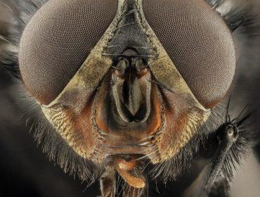 Si no se convierten en moscas, no son un problema