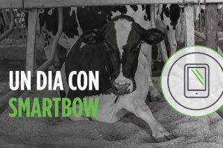Smartbow®, el sistema de monitorización en vacuno lechero  que facilita la vida del ganadero