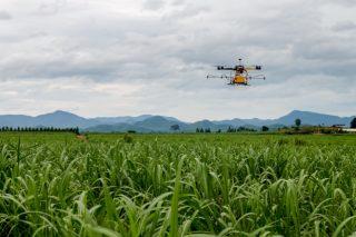Jornada sobre uso de drons y de diferentes fertilizantes y rotaciones para mejorar los rendimientos del maíz forrajero