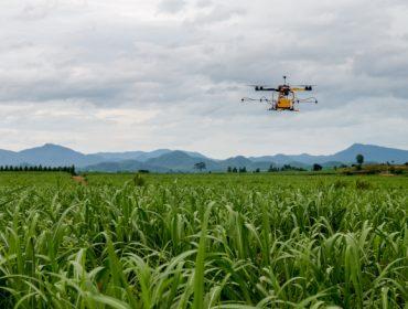 AGROTIG: Un servidor cartográfico web permitirá optimizar los cultivos de cereales