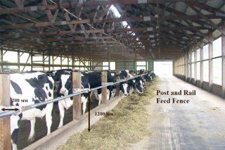 Recomendaciones para la construcción de establos para vacuno de leche