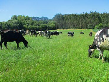 La Xunta estudiará los costes de producción de las ganaderías lácteas y creará la marca «Leche de Pastoreo de Galicia»