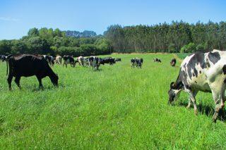 2021: Un gran año para las ganaderías de vacuno de leche en pastoreo y con poco uso de pienso