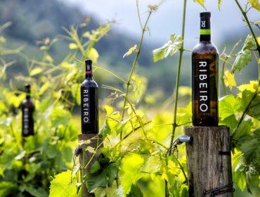 Webinar sobre uso de levaduras autóctonas para diferenciar los vinos del Ribeiro