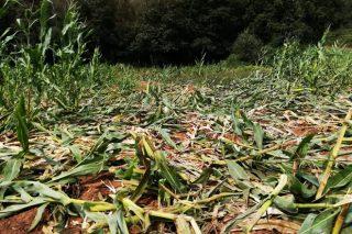 La Xunta destinará más de 2,6 millones a ayudas para compensar y evitar los daños de la fauna silvestre