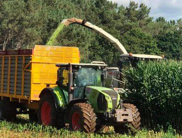 Adelantan el ensilado del maíz en ganaderías del Deza debido a los daños del jabalí