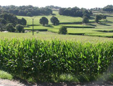 Abierto el plazo de contratación para el seguro de cultivos forrajeros