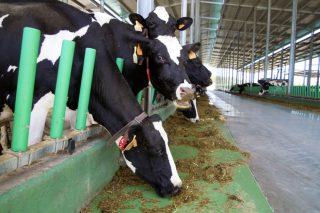 Estudiantes de la EFA Fonteboa diseñan una app para mejorar el bienestar de las vacas