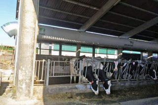 Estrategias en ganaderías gallegas para reducir el estrés por calor en las vacas