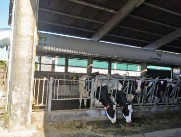 Webinar sobre la optimización de los sistemas para combatir el estrés por calor en vacuno de leche