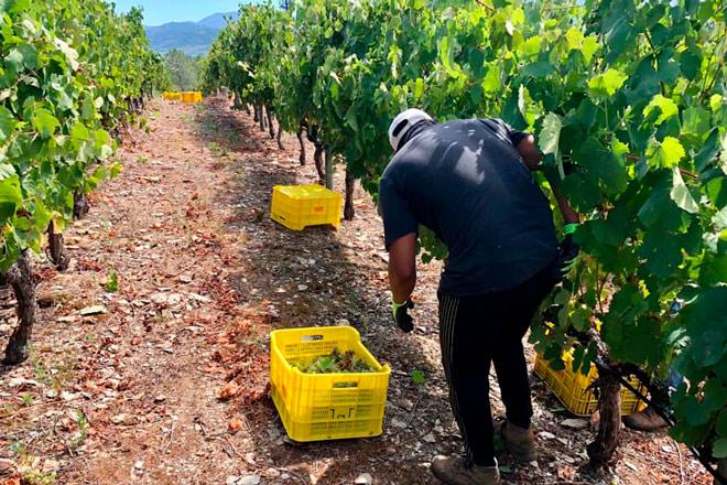 Las ventas de vino bajaron un 5% por el coronavirus