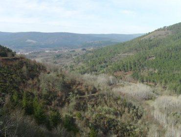 El monte vecinal de Laza se inscribió en el registro de absorción de dióxido de carbono