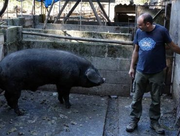 Lourida, una granja pionera de porco celta