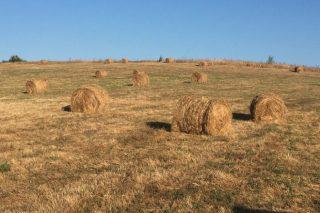 Se venden rollos de hierba seca en Cospeito