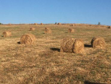 Cuatro frentes de la nueva PAC que preocupan en la ganadería gallega