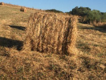 Se venden rotopacas de hierba seca