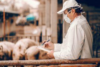 Los expertos piden planes de prevención personalizados como el mejor blindaje contra la Covid-19 en granjas