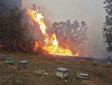 Más de 200 colmenas calcinadas a consecuencia de los incendios en Ourense