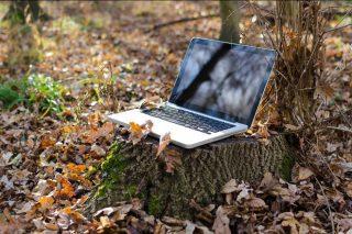 Webinar de FSC sobre gestión forestal y conservación de la biodiversidad