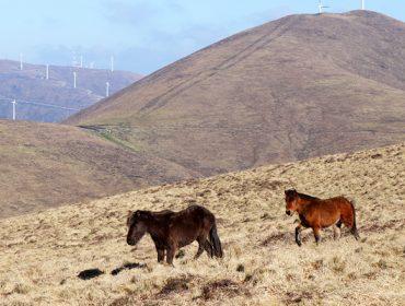 Cómo las 11 comunidades de montes del Xistral se implican en la conservación ambiental