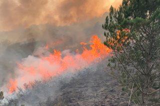 ¿Cómo conservar lo que se salvó de los incendios del Parque Natural do Xurés?
