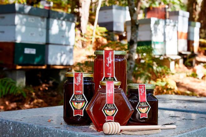 Cerca de 300 apicultores con unas 50.000 colmenas ya están inscritos en la IGP Miel de Galicia