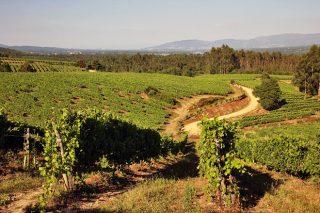 Terras Gauda impulsa un proyecto para la restauración de la biodiversidad de los suelos