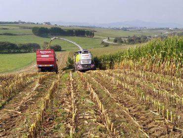 Arranca la campaña de ensilado del maíz con mermas entre el 20 y el 30% en algunas zonas