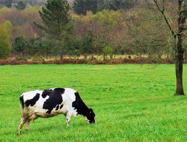 AGACA ofrece formación gratuita sobre certificaciones de calidad y medioambientales en el sector agroalimentario