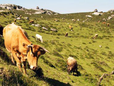 Ejecutados 14 proyectos de pastos en montes vecinales y previstos 30 más en el 2021