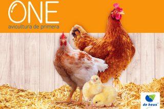 Llega ONE®, el nuevo plan nutricional de De Heus para avicultura industrial