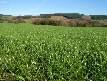 Jornada online de Delagro sobre cultivo de forrajes y pastos