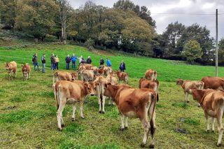 «Estar en pastoreo no tiene por que implicar bajadas bruscas de grasa y proteína»