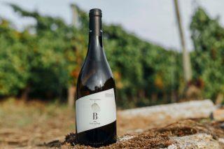 Presentan el primer vino de la Ribeira Sacra elaborado con la variedad Blanco Lexítimo