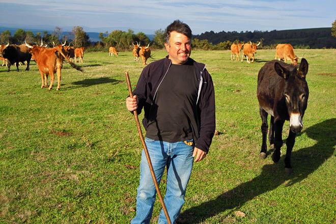 Vacas de Chandeiros SC, las cachenas cortafuegos de O Incio