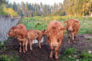 Medio Rural sostiene que el cebadero inmovilizado en Narón tiene relación epidemiológica con un caso de tuberculosis