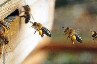 Cursos gratuítos para apicultores de Galicia