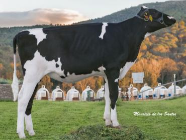 Promoción de embriones en Embriomarket con genética de ganadería Can Thos