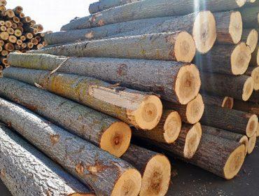 Jornada sobre las posibilidades de producción de madera de chopo en Galicia