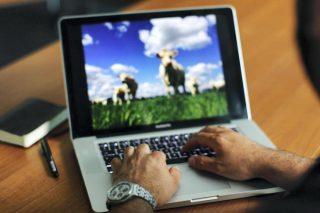 Aprende a leer e interpretar artículos científicos sobre ganado vacuno