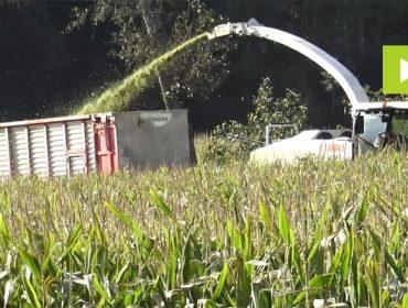 'Pioneer P9400', un maíz que destaca por su potencial productivo