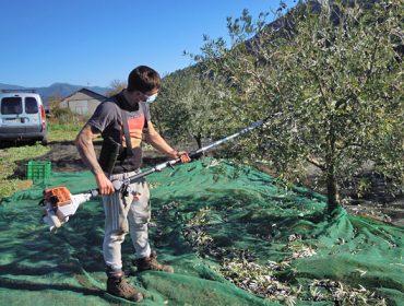 Jornadas sobre la resina y los olivos como oportunidades de negocio en Galicia