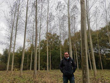 """""""Plantar chopo es viable económicamente, hay una gran demanda de esta madera"""""""
